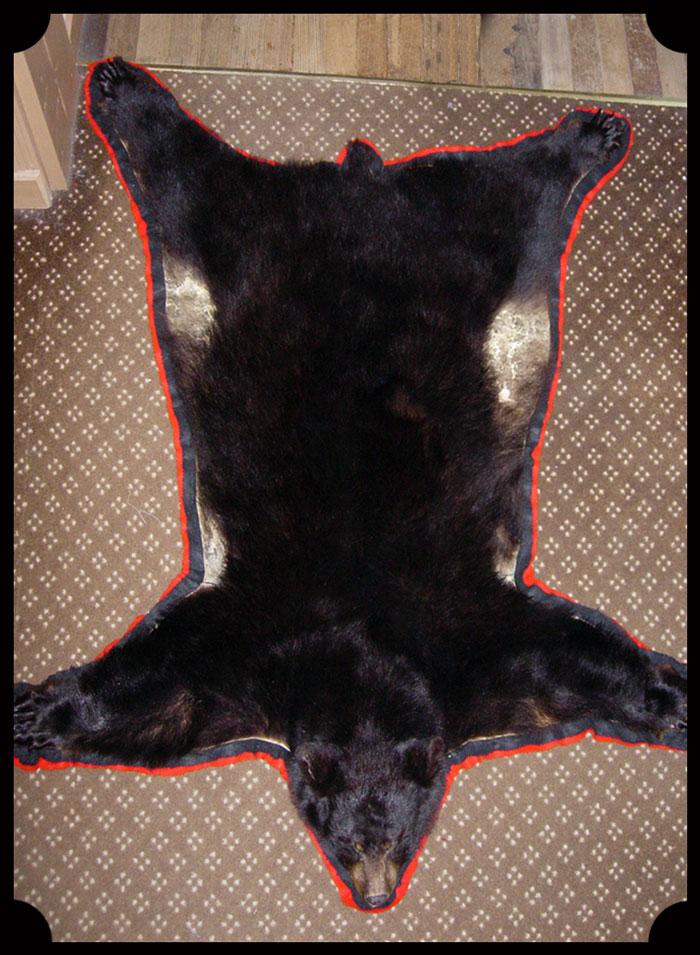 Master Taxidermist Expert Craftsmanship Black Bearskin Rug