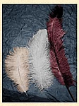 Ladies Hat - Ostrich Plumes