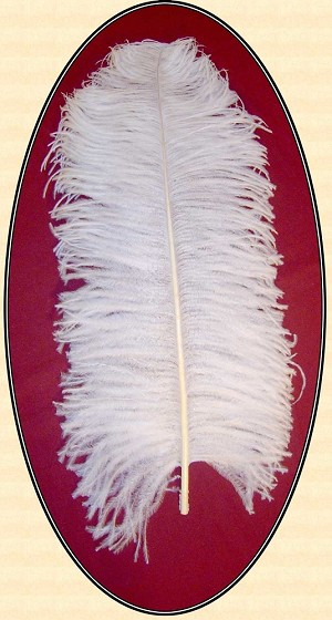Ladies Hat - Exceptionally Large and Regal White Ostrich Plumes